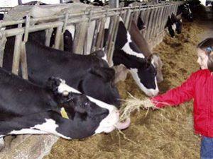 Il latte del mugello non si tocca