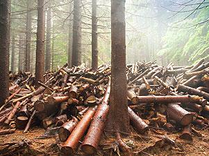 Tesserino per il taglio boschivo