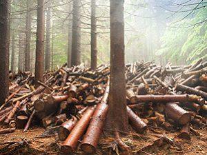 Proroga al taglio boschivo