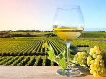 Promozione vino sui mercati terzi