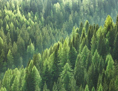 Idee innovative per la valorizzazione delle filiere forestali