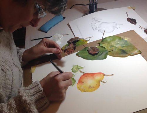 Dicomano: corso di acquerello ed illustrazione botanica