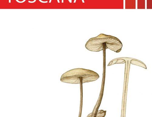 L'importanza della conoscenza nelle attività di raccolta funghi