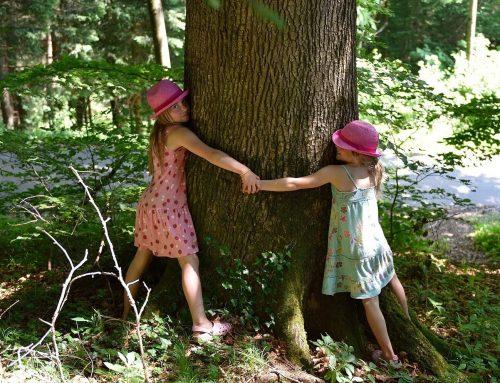 Giornata dell'albero: le iniziative del 21/11 a Borgo San Lorenzo