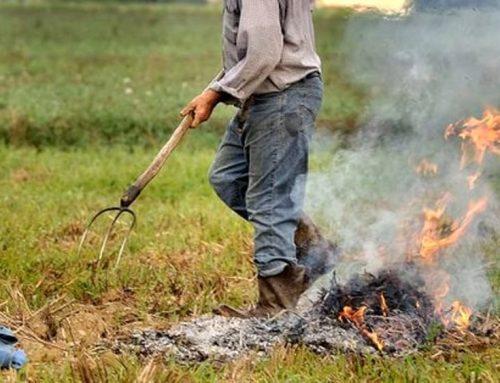 Incendi: evitare ora abbruciamento residui vegetali