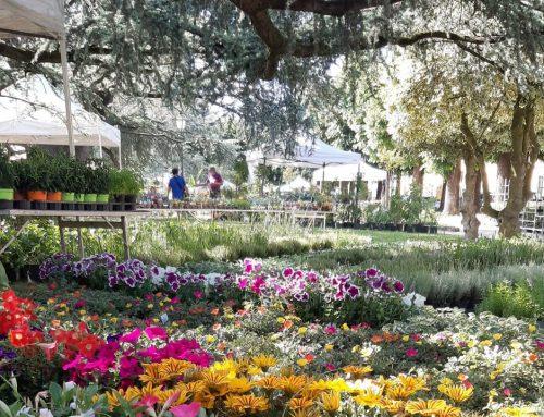 Borgo San Lorenzo: Fiorinfiera  la Mostra Mercato di Piante e Fiori
