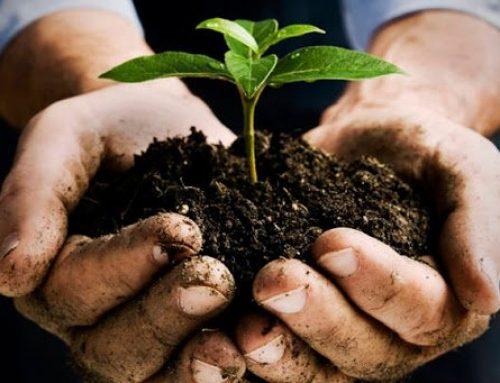 Agrobiodiversità: 790mila euro nel 2020 per il sistema a difesa di razze e varietà a rischio