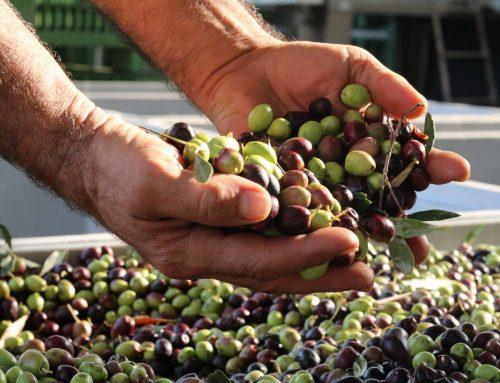 Agricoltura, al via la proposta di legge che fa volare l'oleoturismo